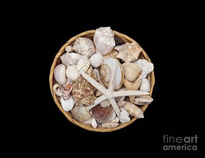 Photograph - Basket Of Shells by Diane Macdonald