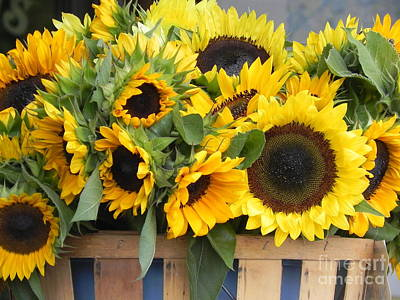 Chrisann Photograph - Basket Of Sunflowers by Chrisann Ellis