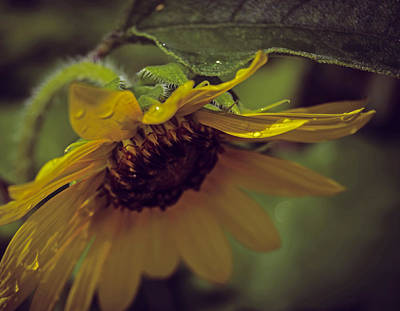 Photograph - Basking After The Rain by Leticia Latocki