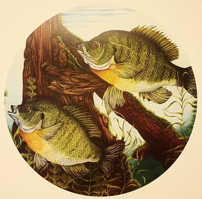 Basking Bluegills Print by Bruce Bley