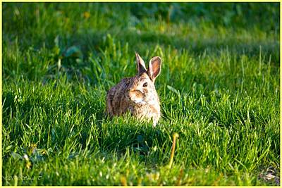 Photograph - Basking Bunny by Sonali Gangane