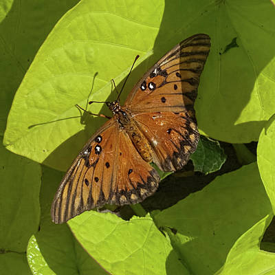 Art Print featuring the photograph Basking Butterfly by Michael Flood