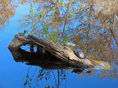 Painted Turtle Photograph - Basking In The Sun by Juergen Roth