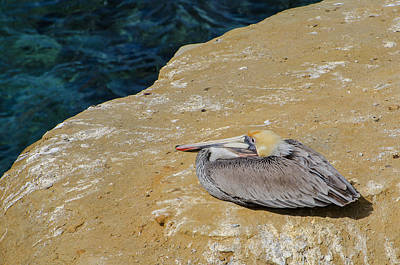 Photograph - Basking In The Sun by Susan  McMenamin