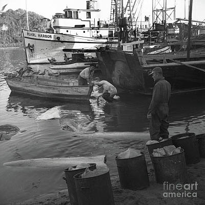 Photograph - Basking Shark Fishery In Moss Landing March 1947 by California Views Mr Pat Hathaway Archives
