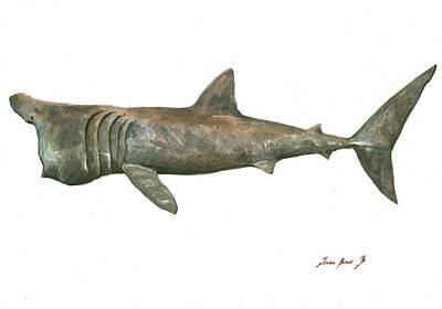 Hammerhead Shark Painting - Basking Shark by Juan Bosco