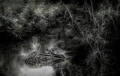 Photograph - Basking Turtles by Joseph Hollingsworth