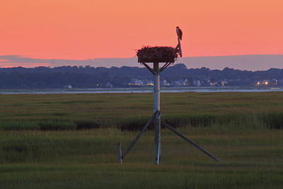 Photograph - Bass Hole Cape Cod Osprey Nest by John Burk