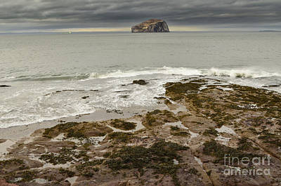 North Sea Photograph - Bass Rock by Nichola Denny