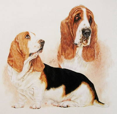 Drawing - Basset Double by Barbara Keith