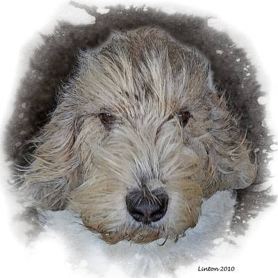 Griffon Digital Art - Basset Griffon Vendeen by Larry Linton