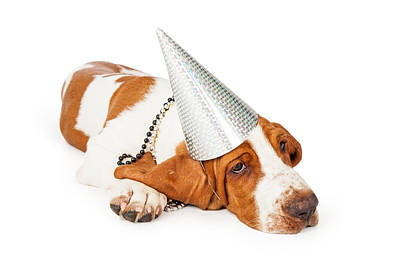Basset Hound Dog Wearing Silver Party Hat Print by Susan Schmitz