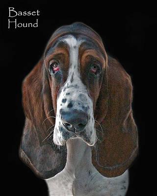 Basset Hound Photograph - Basset Hound by Larry Linton