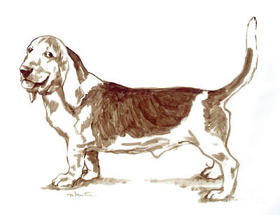 Drawing - Basset Hound by Meridith Martens