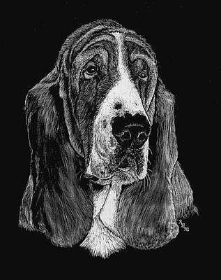 Drawing - Basset Hound by Rachel Hames