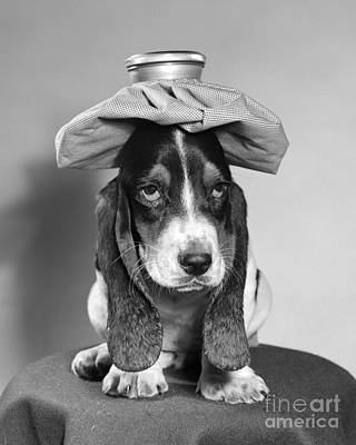 Basset Hound With Ice Pack Art Print by D. Corson/ClassicStock