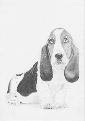 Basset Drawing - Basset Hound Puppy by David Smith