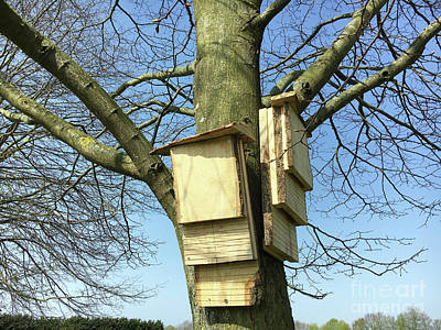 Photograph - Bat Boxes On A Tgreet Trunk by Tom Gowanlock