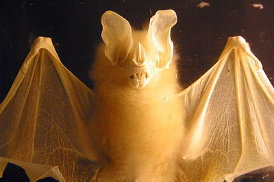 Bat Out Of Gel Art Print by Jez C Self