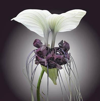 Bat Plant Art Print