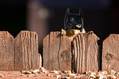 Bat Squirrel  The Cape Crusader Known For Putting Away Nuts.  Art Print by James BO  Insogna