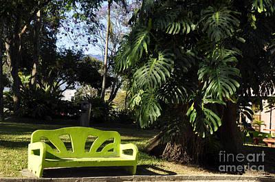 Photograph - Batalla De Rivas Park by Andrew Dinh
