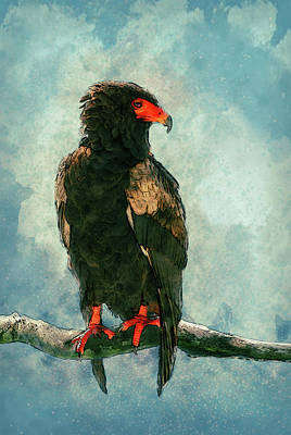 Scream Digital Art - Bateleur Eagle by Jack Zulli
