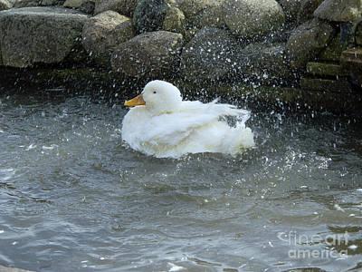 Photograph - Bath Time by Ann Horn