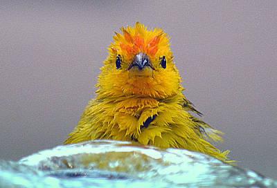 Photograph - Bath Time Finch by Lori Seaman