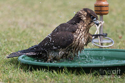 Photograph - Bath Time by Terri Waters