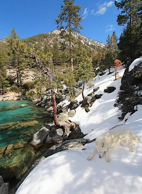 Photograph - Bathe In The Light Of Lake Tahoe by Sean Sarsfield