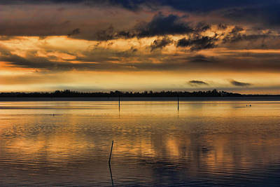 Photograph - Bathed In Gold by HH Photography of Florida
