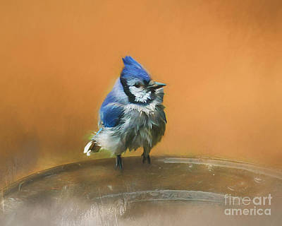 Photograph - Bathing Blue Jay by Clare VanderVeen