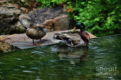 Photograph - Bathing by Diana Mary Sharpton
