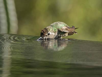 Photograph - Bathing Hummingbird 1666 by Tam Ryan