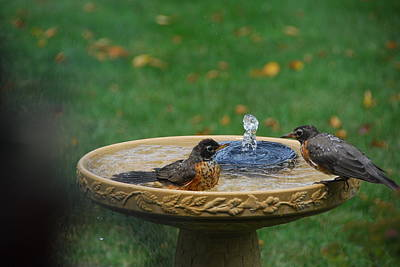 Photograph - Bathtime In The Front Yard by Wanda Jesfield