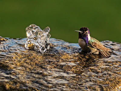 Photograph - Bathtime by Sandra Selle Rodriguez