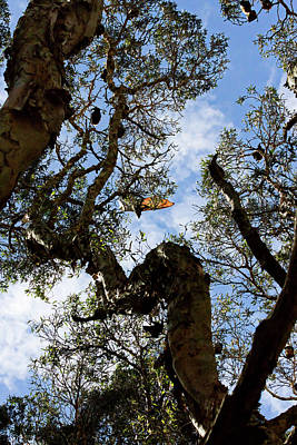 Photograph - Bats Trees by Miroslava Jurcik