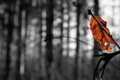 Photograph - Battered Leaf by Dylan Punke