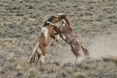 Forelock Photograph - Battle For Dominance W2572 by Wes and Dotty Weber