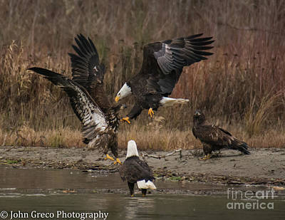 Photograph - Battle by John Greco