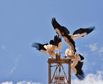 Photograph - Battle Of The Storks by Tatiana Travelways