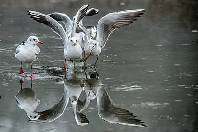 Photograph - Battle Reflection  by Cliff Norton
