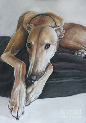 Rescued Greyhound Painting - Bauregard by Charlotte Yealey