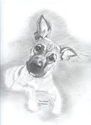 Pitbull Drawing - Baxter by Don  Gallacher