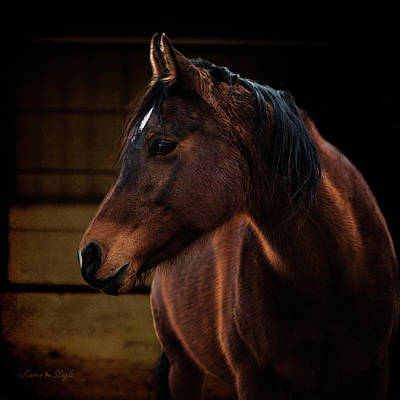 Photograph - Bay Arabian Mare 2 by Karen Slagle