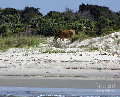 Photograph - Bay At The Beach by D Hackett