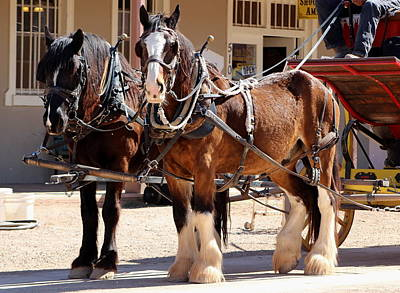 Bay Colored Clydesdale Horses Art Print