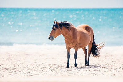 Vermeer Rights Managed Images - Bay Horse on Beach Royalty-Free Image by Anna Smolens