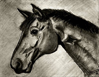 Bay Horse Drawing - My Friend The Bay Horse by Jose A Gonzalez Jr